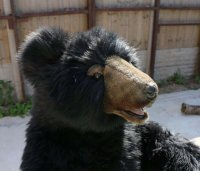 Soft Toy Black Bear by Hansa (90cm)