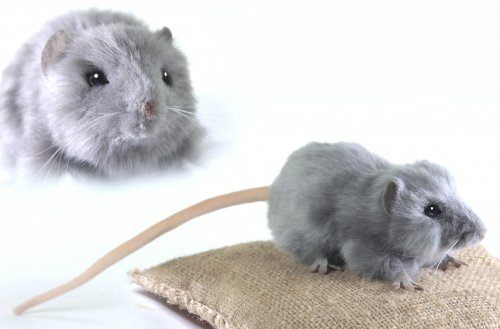 Soft Toy Rodent, Grey Rat by Hansa (12cm)